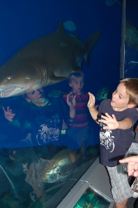 shark obsessed
