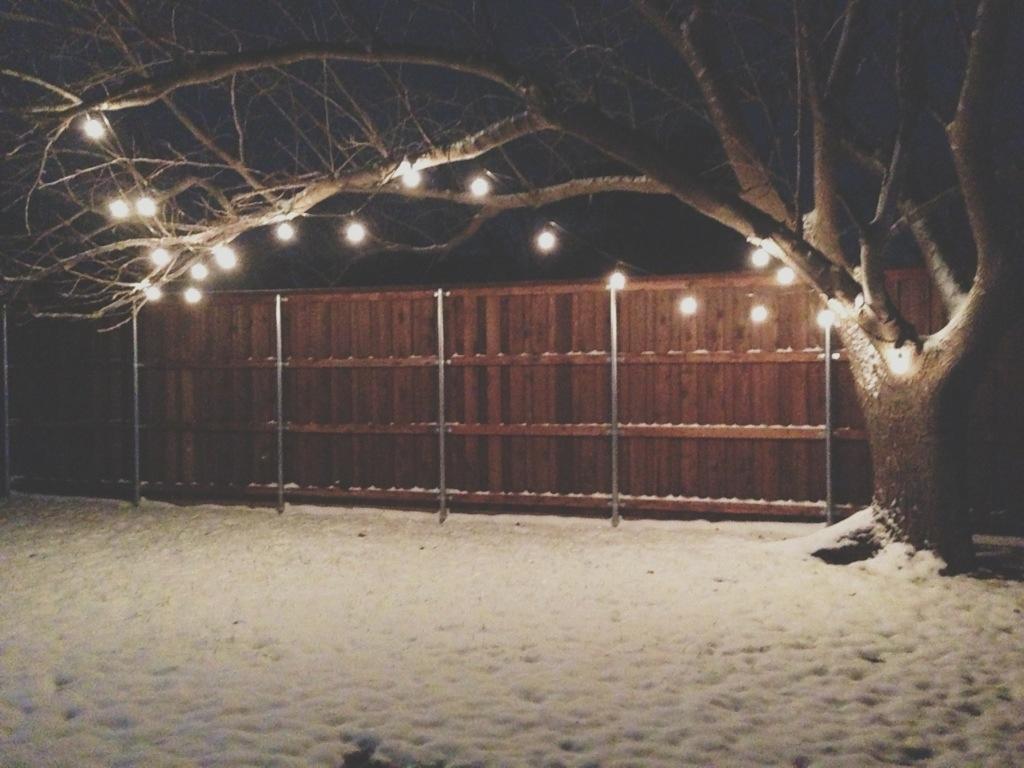tree | snow | lights