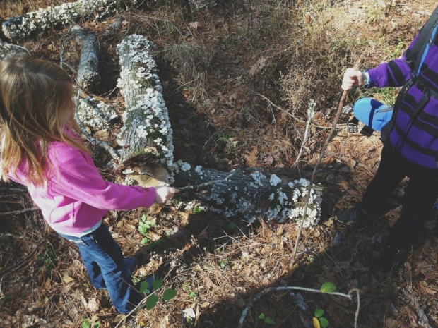 identifying fungi